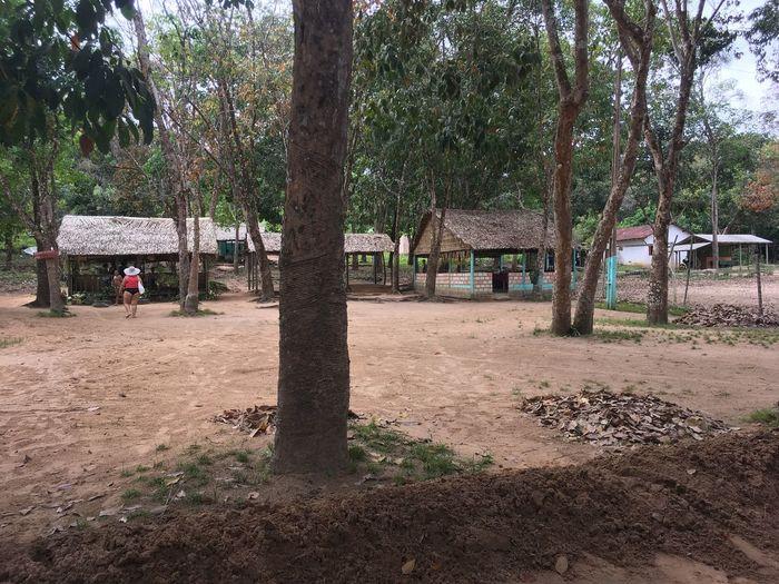 Maguari