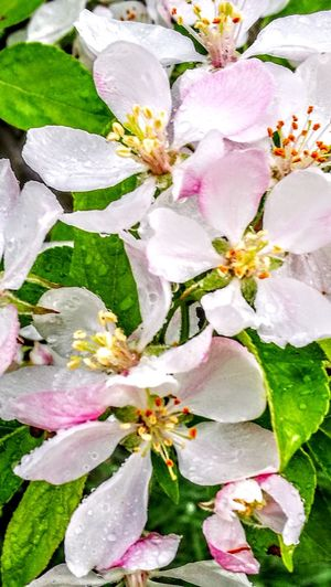Blütenmeer ...Apfelbaum.... Flower Fragility Beauty In Nature Nature Water Petal Close-up No People Leaf Freshness Pink Color Plant Growth Flower Head Green Color Outdoors Backgrounds Day Multi Colored Springtime Blooming Freshness Tree Originalpicture Wendland