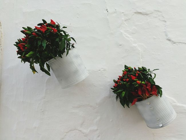 Flower Bouquet Red Plant Christmas Christmas Decoration No People Day Freshness Locorotondo Puglia South Italy Italy🇮🇹 Puglia, Italy