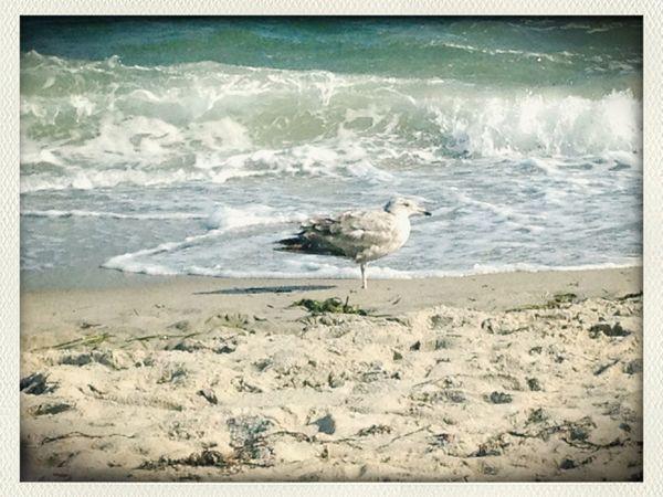 ©Ann Rigley Seagull Serenity Cape Cod IoLIGHTstudios  Beachphotography Beach Photography At The Beach Life Is A Beach