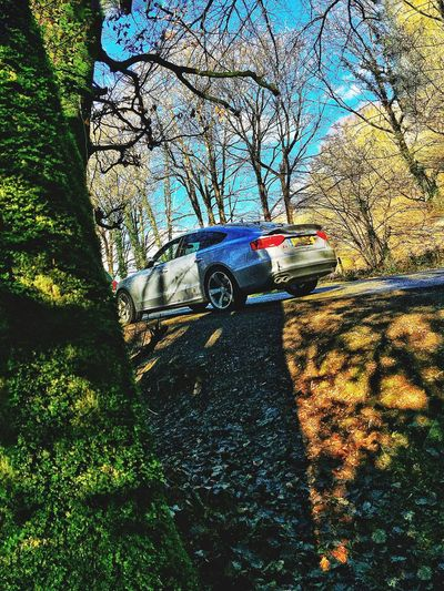 Just another Sunday drive. Tree Car Land Vehicle Transportation Mode Of Transport Stationary Beauty In Nature No People Outdoors IPhoneography Enjoying The View Transportation Low Angle View Tranquility Beauty In Nature Audi Audi ♡ Audi A5 LoveCars Cars Germanengineering