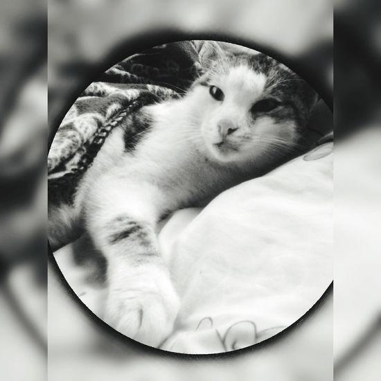 Cat My Cat Blackandwhite Edits Bluartist #effect Followme PLZ FOLLOW ME