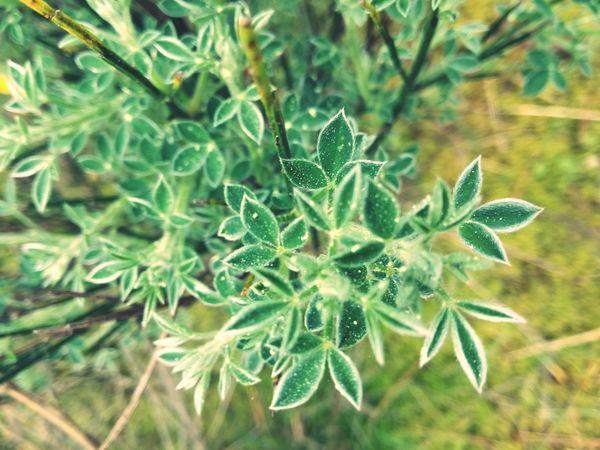 Leaf Flower Flower Head Close-up Plant Green Color
