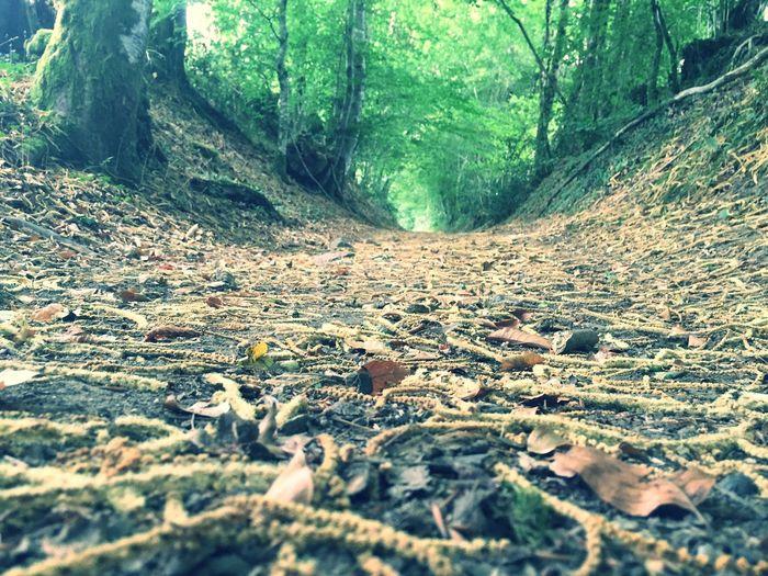 Nature_collection EyeEm Nature Lover Forest EyeEm Best Shots EyeEm Floor