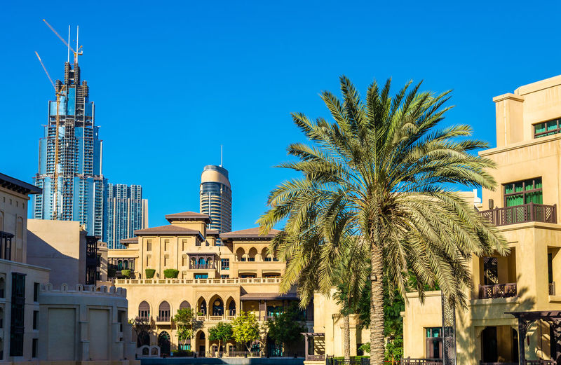 Palm trees and buildings against blue sky
