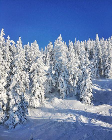 Fresh Snow Snow