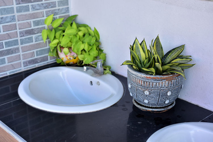 High angle view of potted plant against wall at home