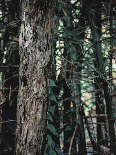 ไม้แห้ง Tree Plant Trunk Tree Trunk Growth No People Nature Backgrounds Tranquility Full Frame Pattern Outdoors Beauty In Nature Focus On Foreground Day Forest Close-up Textured  Land Branch