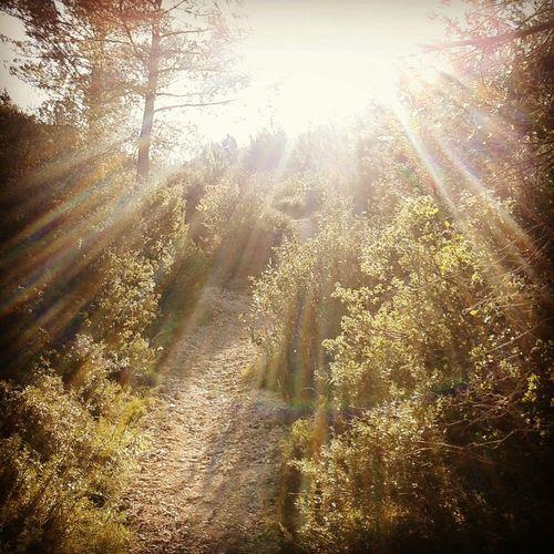 Trail Running Trailrunning Trail Running Boulbon Bouches Du Rhone La Montagnette Frigolet malgré le soleil et l'absence de neige, le froid etait bien là. Merci le mistral!