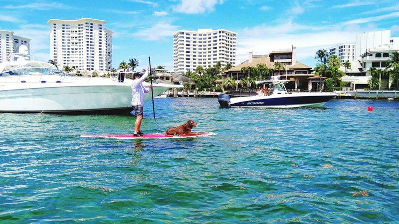Dog paddleboarders First Eyeem Photo Dogs Sea Sky Water Nautical Vessel Outdoors Architecture Waterfront Paddleboarding