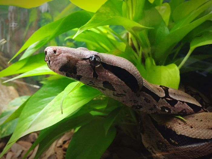 Recomendo, Nature, Snake