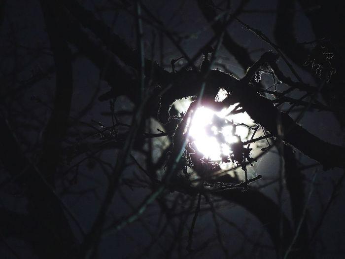 Luna Noche Invierno Heladas Anochecer Brillante Ramas Frio NOCHE OSCURA // Moon Moonlight Night Winter Frost To Become Night Sparkly Between Nature Branches Cold Dark Night Nikon P520 Nikon Nikon_photography Noches Con Encanto Perspectives On Nature