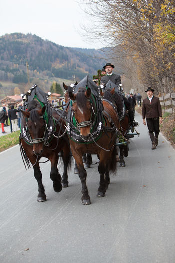 Schliersee, Bavaria - November 5, 2017: Every year on the 1st Sunday in November, the Idyllic Horse procession, named Leonhardi in Bavarian Schliersee takes place in commemoration of Patron St. Leonhard. In traditional clothing and decorated horse-drawn carriages horses and riders move to the church of St. Leonhard Bavaria Bavarian Lord God Bavarian Tradition Catholic Leonhard Ride Leonhardi Patron St.Leonhard Saint Leonhard Schliersee, Bayern Traditional Clothing Animals Cart Cultures Day Domestic Animals Horse Horse Procession Idyllic Mammal Men Outdoors People Real People Rural Life Tree