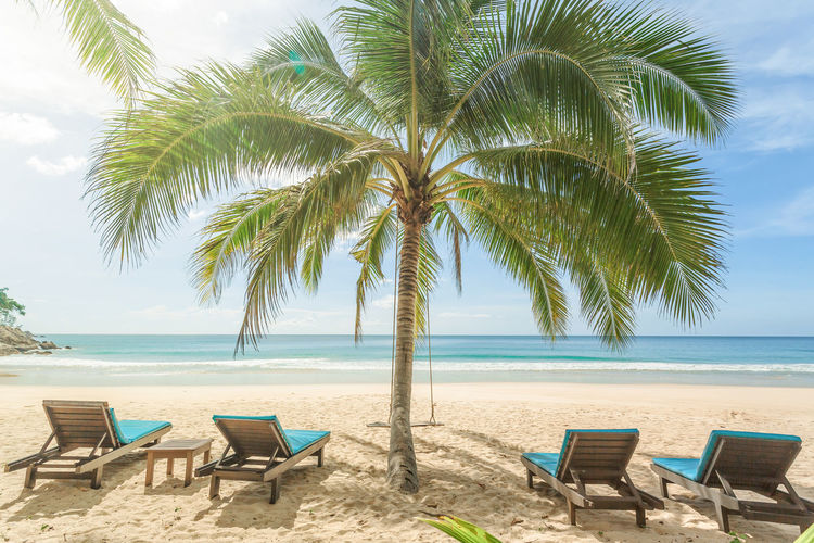 Lounge chairs and palm tree on beach against sky