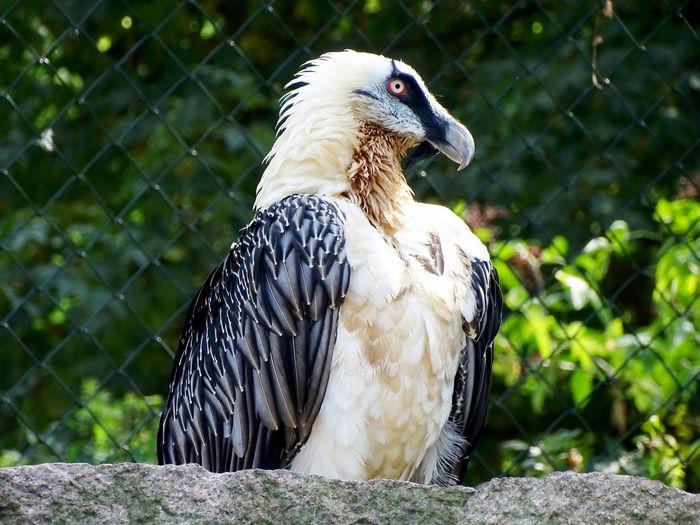 Bird Photography Bird Bird Of Prey Perching Beak Vulture Close-up Animals In Captivity Birdcage