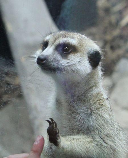 Loving Animal Themes Animal Wildlife Close-up Cutness Mammal One Animal Outdoors