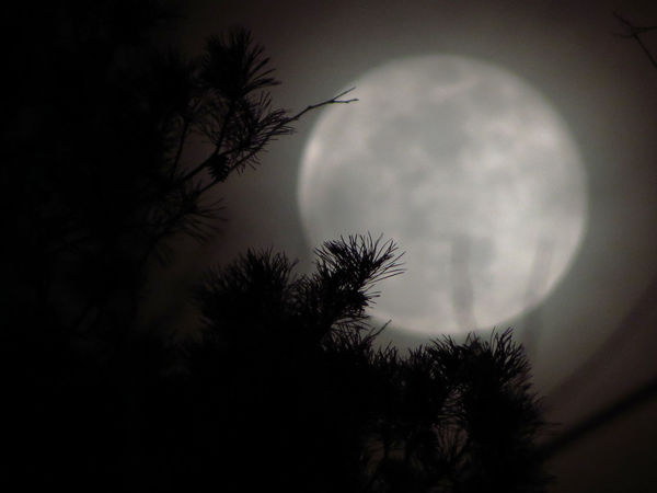 Nina's trip to the moon Moonlight Shadow Astronomy Beauty In Nature Close-up Dreamy♡ Fog Fogy Moon Full Moon Growth Low Angle View Mistic Moon Moonlight Nature Night No People Outdoors Pine Tree Pine Tree Branch Silhouette Sky Space Tranquil Scene Tree Trip To Moon
