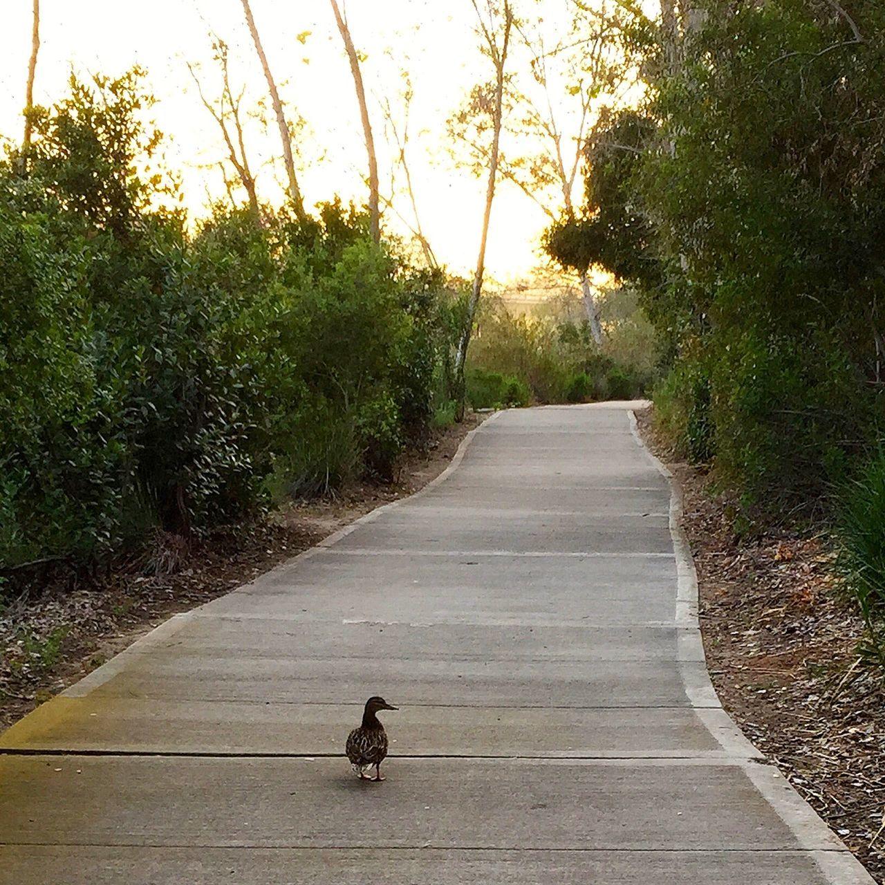 Bird On Narrow Pathway Along Trees