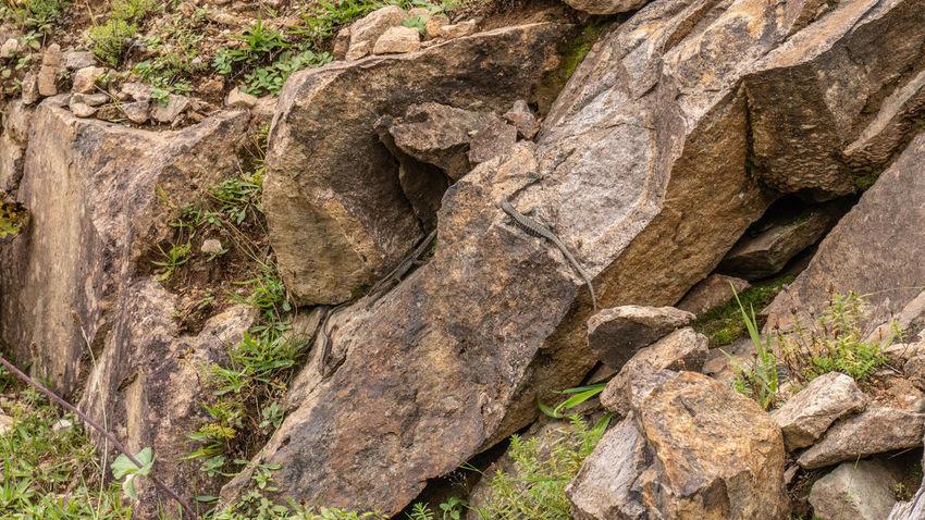 Lacerta Wildlife Photography Art Fauna Nature Outdoors Rock Rock Formation