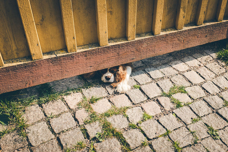 View of dog underneath fence