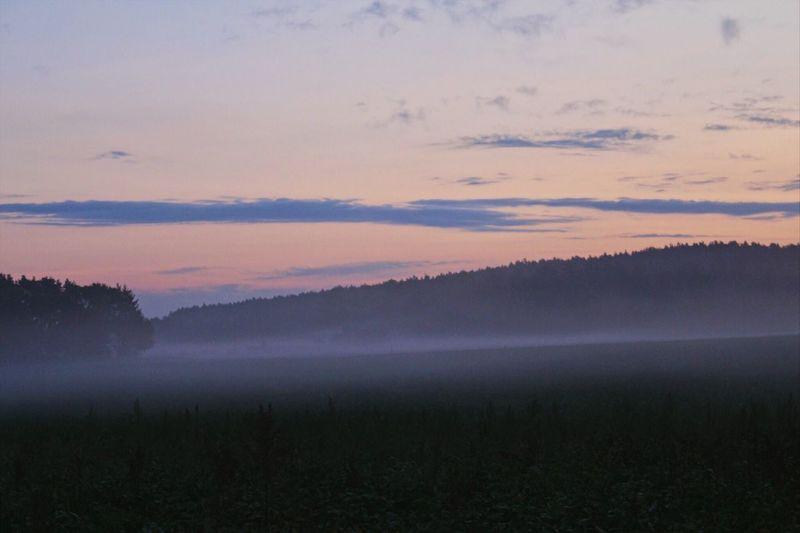Hamburg Metzingen Hitzacker Dannenberg (Elbe) Nature Tranquility Landscape Forest Fog