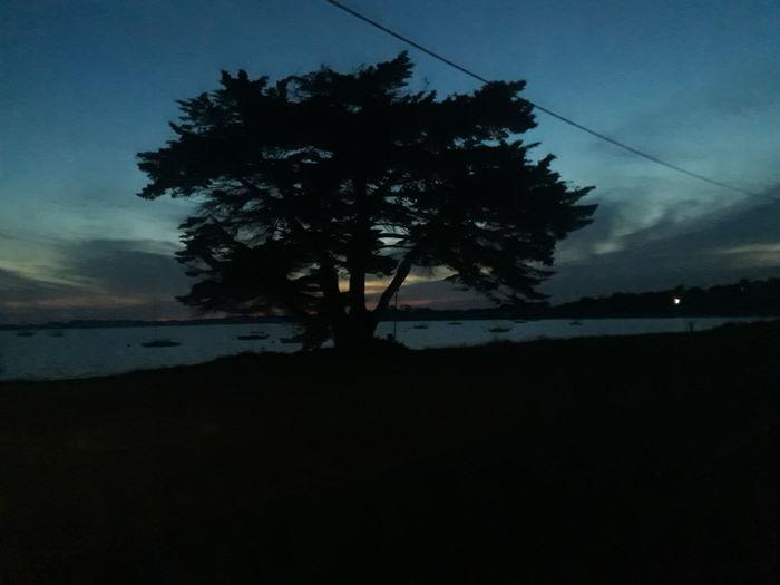 Silhouette in the half-light Silhouette Tree Sky Outdoors Rhyll Australia