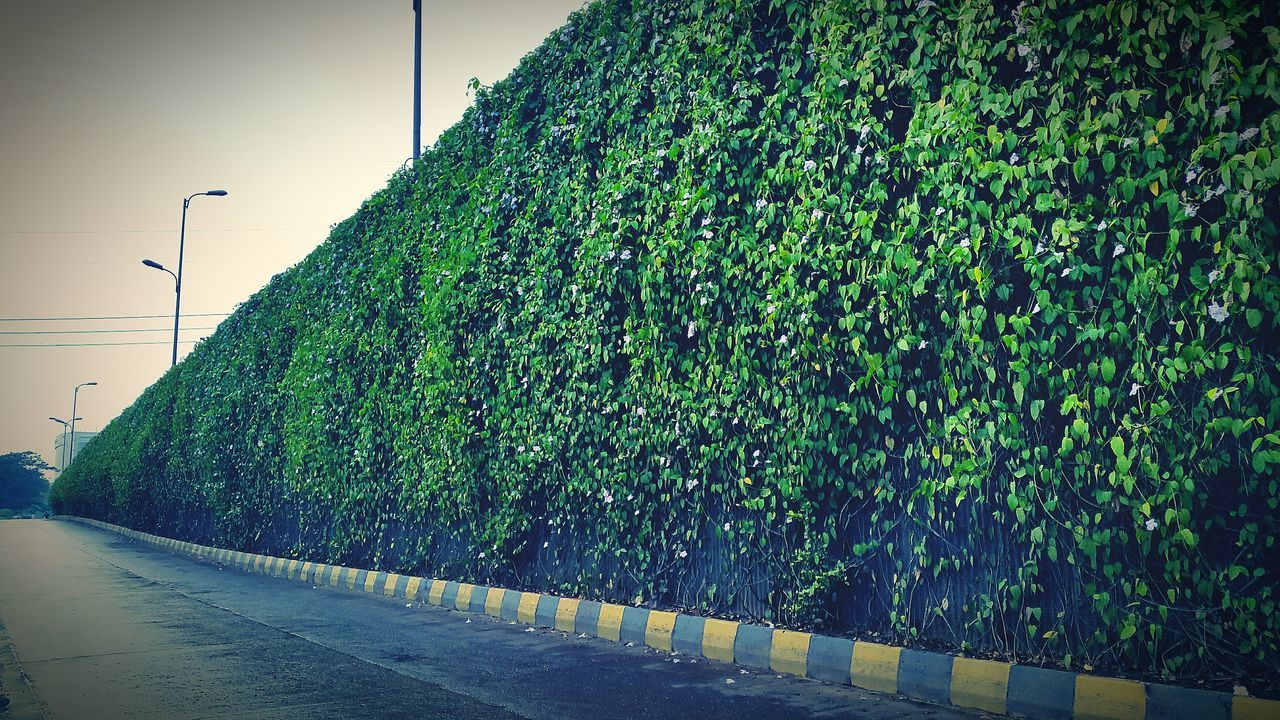 Empty Road By Ivy Covered Wall