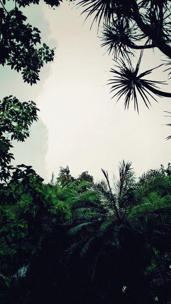 Manila, Philippines Jungle