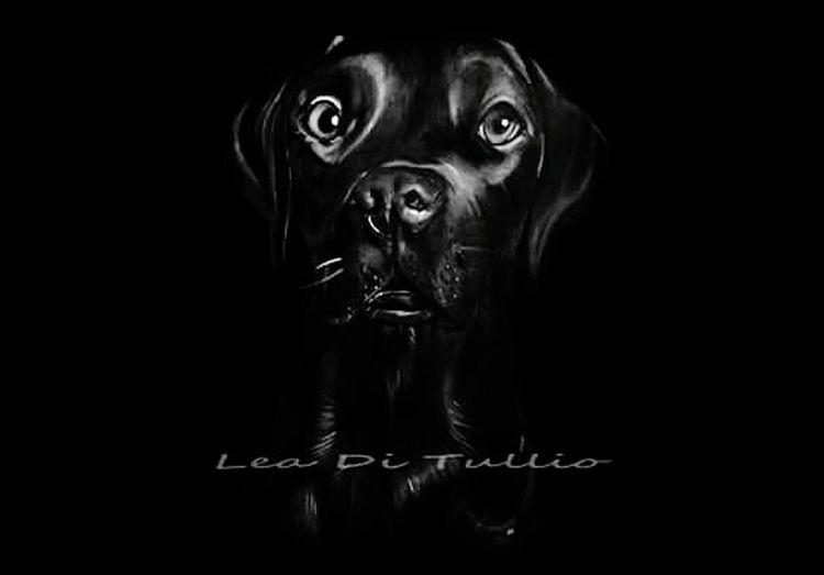 BlackLab Dark Fantasy Black Background Painting Artwork Painting Art LabradorRetriever Dogofmylife Eyembestshots Eyemphotography Beauty Labrador Retriever Dogofeyeem Emotions Captured