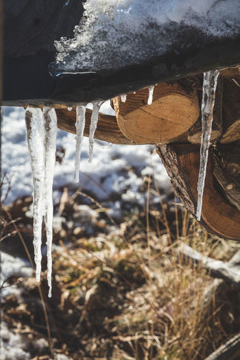 Close-up of icicles on field