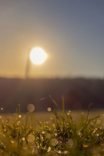 Copyspace Copy Space Beauty In Nature Plant Field Growth Sun Nature Sunlight No People Landscape Scenics - Nature Outdoors Tranquil Scene Blade Of Grass Grass Morning Morning Light Sunrise Fields And Sky Bokeh Morning Dew