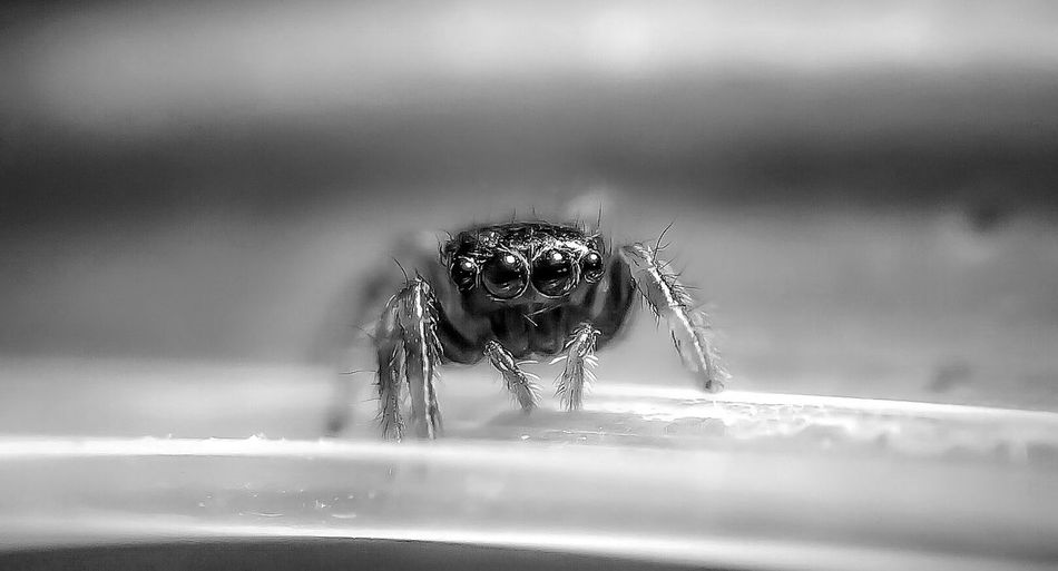 Close-up of jumping spider on surface