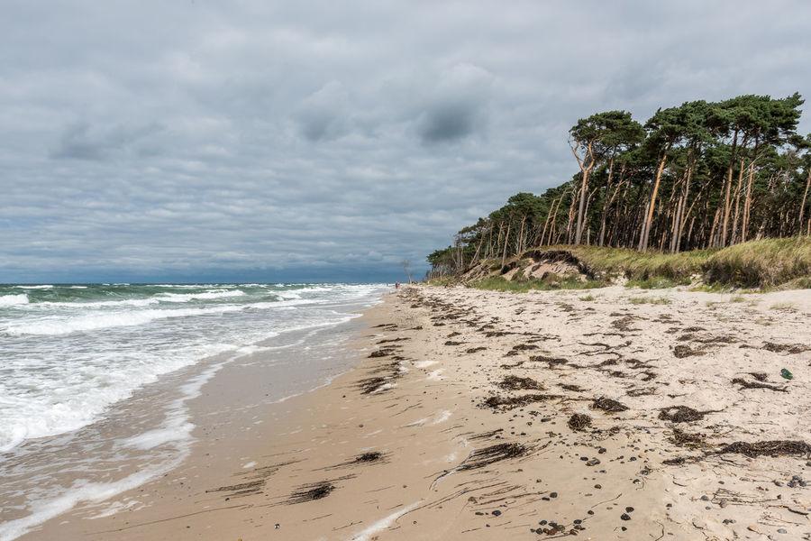 Bäume Deutschland Himmel Landschaft Ostsee Strand Weststrand Wolken Bewölkt Darß Horizon Küste Natur Sand Spuren Tag Wellen