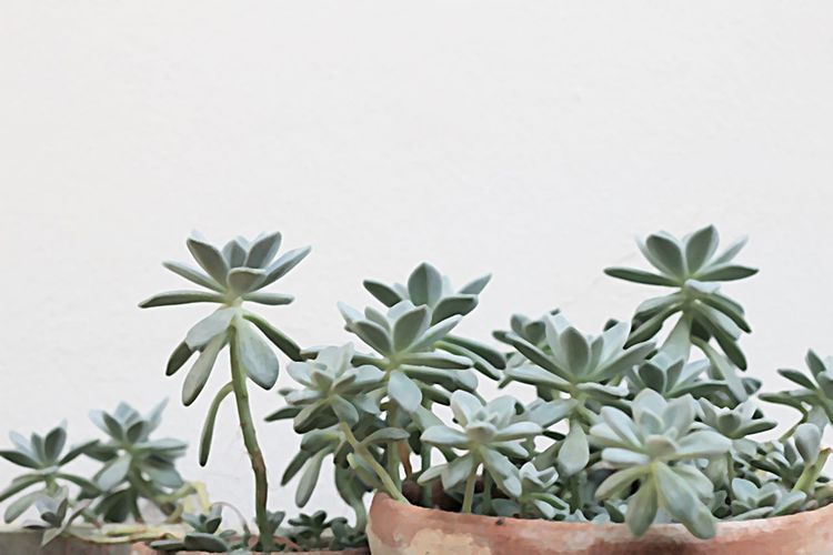 green leaves background oil painting style Plant Growth Leaf Plant Part Nature Green Color No People Close-up Beauty In Nature Succulent Plant Oil Panting Green Leaves