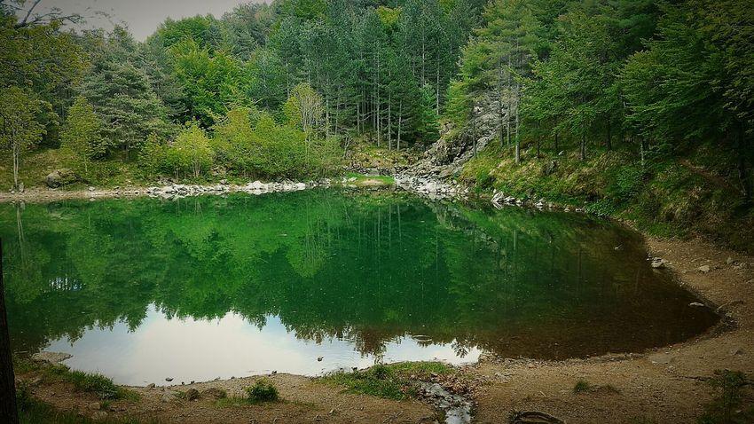 Lake Nature Reflection Water Outdoors Beauty In Nature Forest Nature Reflection Tranquility