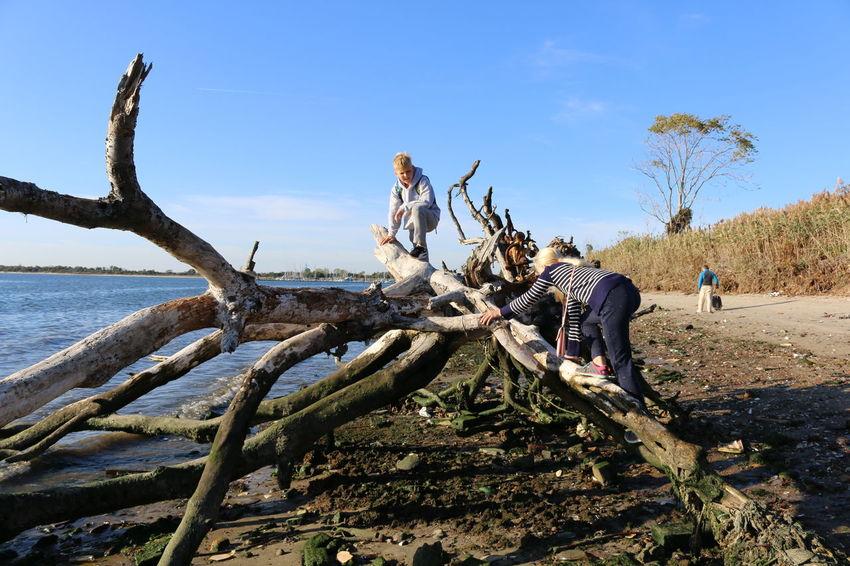 Beach Life Beach NY Brooklyn Ny Dead Tree Horizontal Outdoors People Sky Water