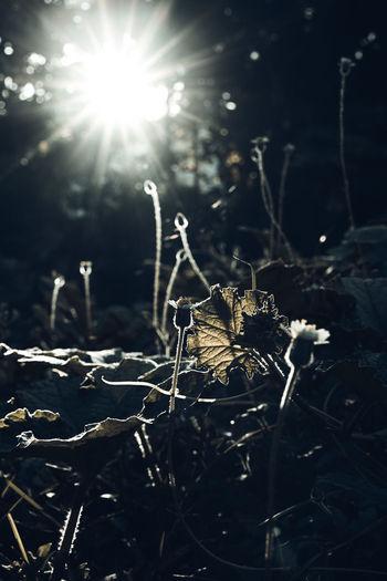 shoot backlit