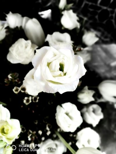 Flower White Color Nature Petal Fragility Beauty In Nature Flower Head No People Close-up Freshness Day Outdoors Brescia