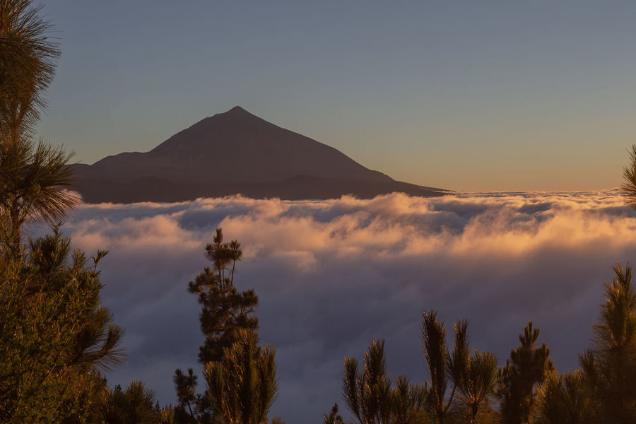 above the clouds Clouds And Sky #clouds  Outdoors Outdoor Photography Nature_collection EyeEm Nature Lover Nature Photography EyeEm Selects Eye4photography  EyeEm Best Shots EyeEm Gallery EyeEm EyeEmBestPics Tenerife Canary Islands Volcano Tree Mountain Sunset Sky Landscape
