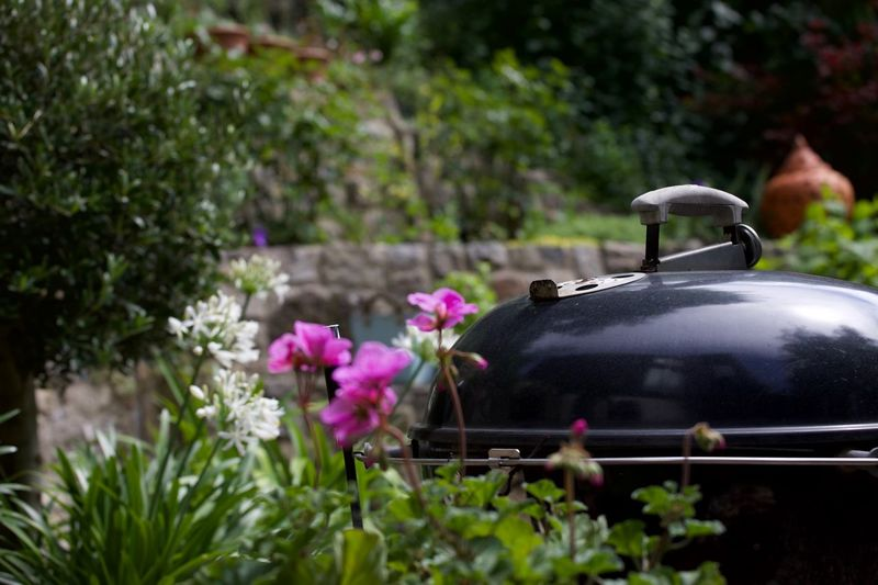 summer barbecue Barbecue Barbecue Grill Beauty In Nature Close-up Day Flower Food Fragility Freshness Garden Grilled Growth Meat Nature No People Outdoors Plant Selective Focus Summer Transportation Tree Vegetables Warmth