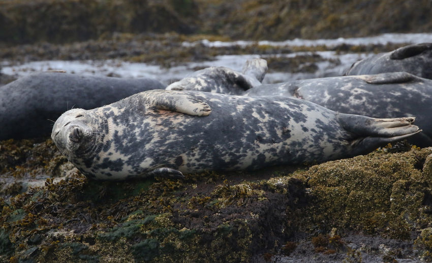 Close-up of seals in the wild
