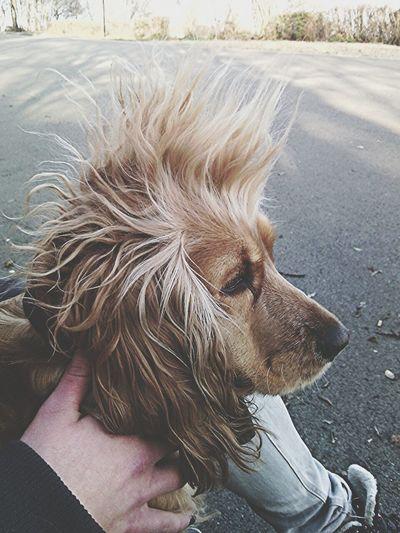 Punk's not dead! Dog Punks Not Dead Cute Pussymagnit :D