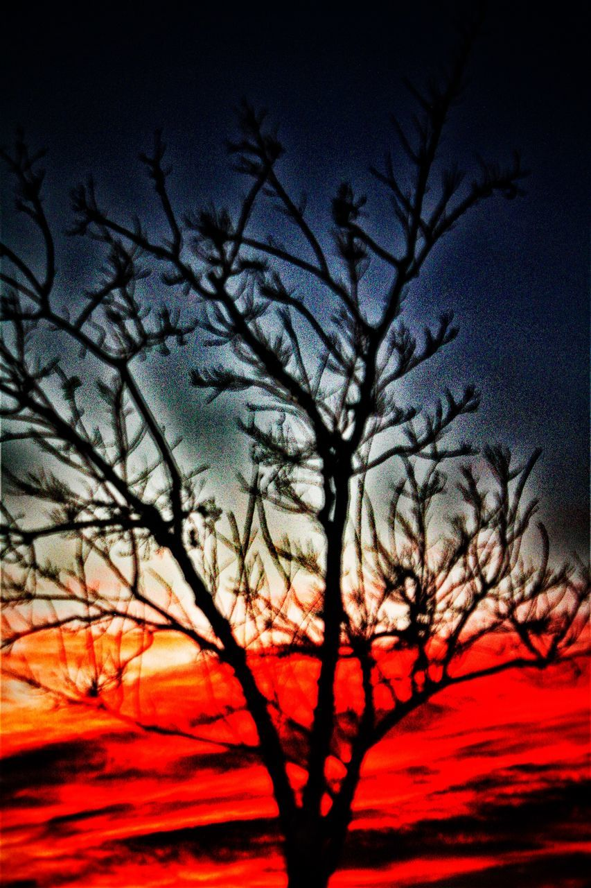 bare tree, tree, beauty in nature, sunset, nature, silhouette, branch, no people, sky, low angle view, tranquility, growth, outdoors, scenics, night, close-up, freshness