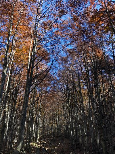 Faggeto Autumn colors Autumn Tree Low Angle View Full Frame Plant No People Backgrounds Nature Day Beauty In Nature Outdoors Sky Pattern Tranquility Forest Scenics - Nature Land WoodLand