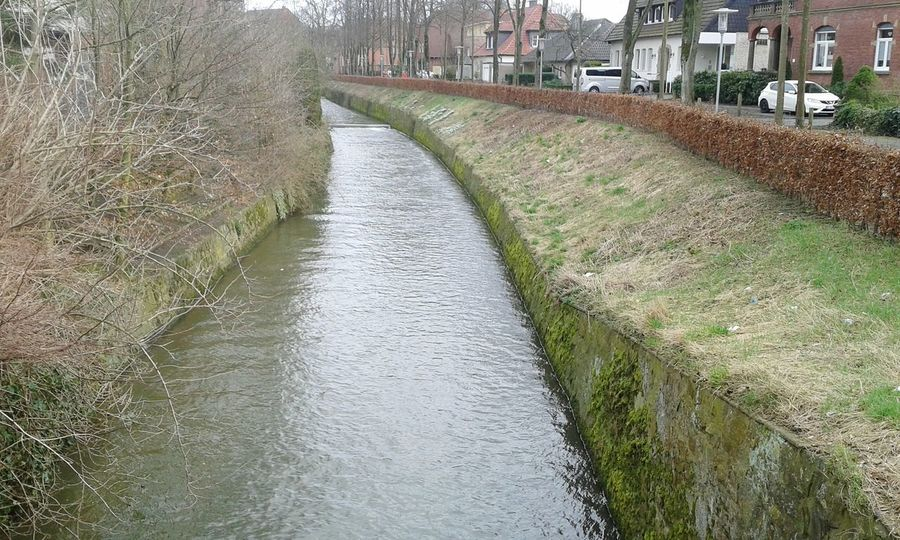 Nature Growth Water The Way Forward Outdoors Day No People Tree Beauty In Nature Berkel
