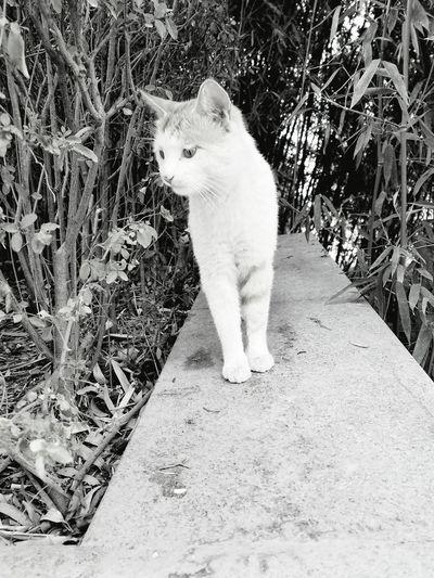 校园里渴望食物的流浪猫 First Eyeem Photo