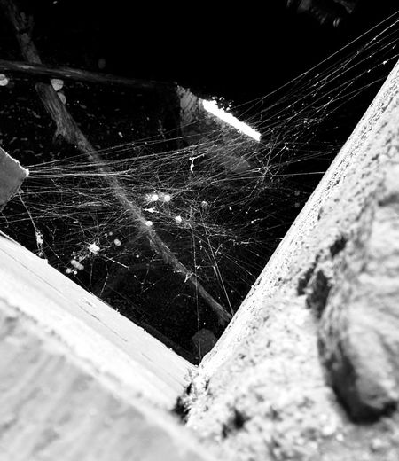 Spider Web Spider Eggs Abandoned Buildings