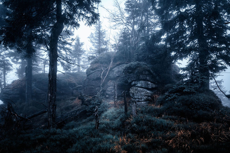Tree Forest Plant Land Tranquility Beauty In Nature Nature Growth Tranquil Scene Tree Trunk Trunk WoodLand Scenics - Nature No People Day Non-urban Scene Fog Outdoors Environment Harzmountains Harz Rock Rocks EyeEm Nature Lover