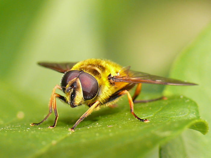 Fly Insect Fly