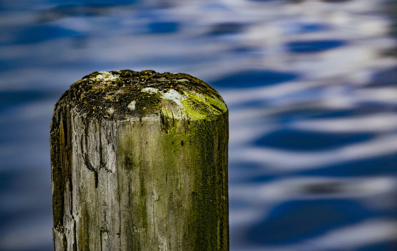 pier pole Backgrounds Beautiful Close-up Day Detail Deterioration EyeEm Best Edits EyeEm Best Shots Focus On Foreground Nature No People Old Outdoors Pier Pole Rippled Selective Focus Textured  Tranquility Water Wood - Material Wooden Post
